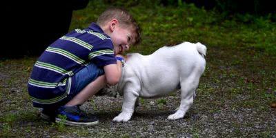 family pet dog boy